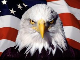 Papel de parede Águia – Americana