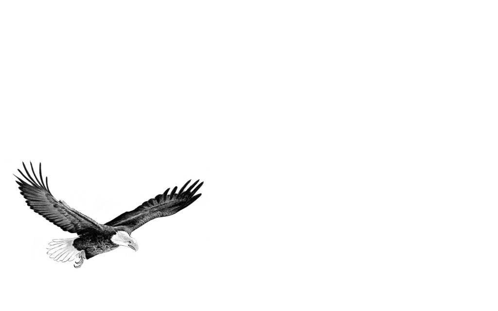 Papel de parede Águia – Desenho para download gratuito. Use no computador pc, mac, macbook, celular, smartphone, iPhone, onde quiser!