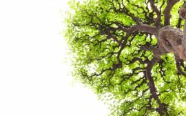 Papel de parede Árvore Vista de Baixo ao Topo