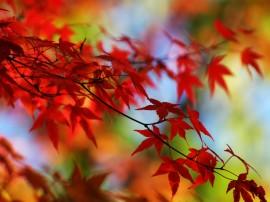 Papel de parede Folhas Vermelhas