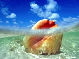 Papel de parede Concha no Mar