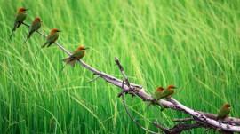 Papel de parede Pássaros no Galho