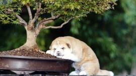 Papel de parede Cãozinho Dormindo no Vaso de Planta