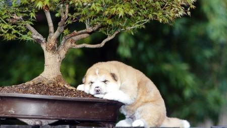 Papel de parede Cãozinho Dormindo no Vaso de Planta para download gratuito. Use no computador pc, mac, macbook, celular, smartphone, iPhone, onde quiser!