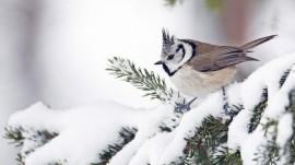 Papel de parede Pássaro na Neve