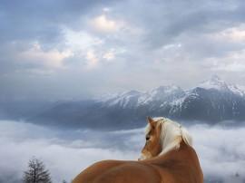 Papel de parede Cavalo e Montanhas
