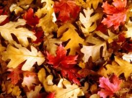 Papel de parede Tapete de Folhas do Outono