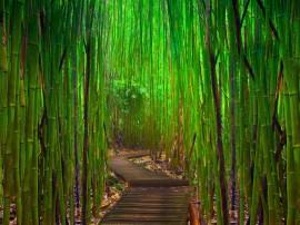 Papel de parede Caminho no Bambu