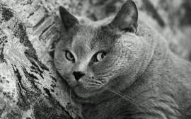 Papel de parede Gato em Preto e Branco