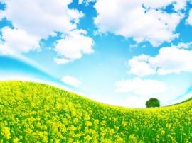 Papel de parede Linda Planície Verde