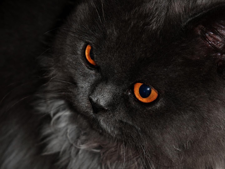 Resultado de imagem para olhos laranjas