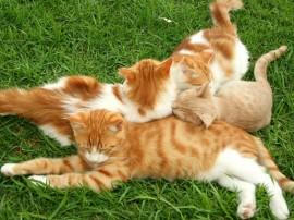 Papel de parede Gatos Dormindo na Grama