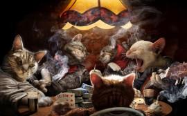 Papel de parede Cartiado dos Gatos