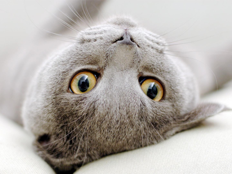 grey kitten wallpaper 294 - photo #17