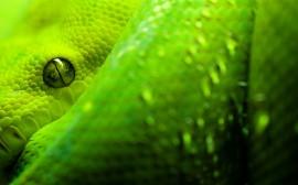 Papel de parede Cobra Verde de Perfil