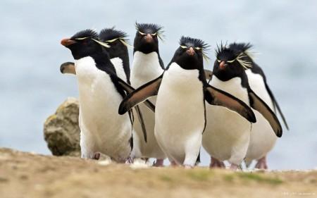 Papel de parede Pinguins para download gratuito. Use no computador pc, mac, macbook, celular, smartphone, iPhone, onde quiser!