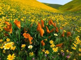 Papel de parede Flores do Campo Coloridas