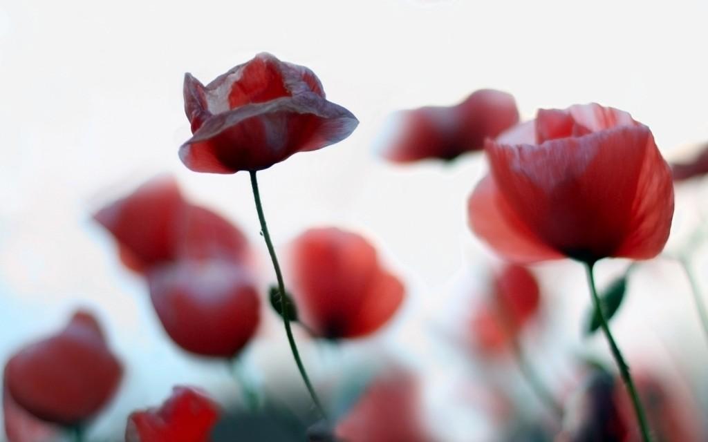 Papel de parede Pequenas Flores para download gratuito. Use no computador pc, mac, macbook, celular, smartphone, iPhone, onde quiser!