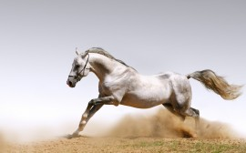 Papel de parede Cavalo de Corrida