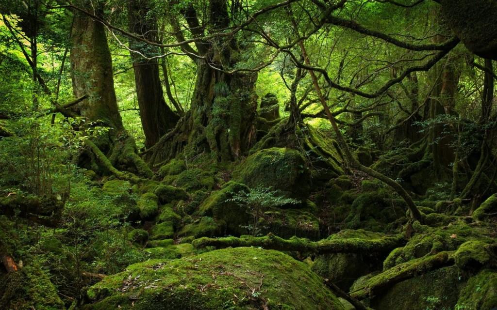 Papel de parede Floresta Tropical para download gratuito. Use no computador pc, mac, macbook, celular, smartphone, iPhone, onde quiser!