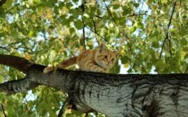 Papel de parede Gato Subindo na Árvore