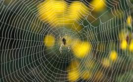 Papel de parede Teia da Aranha