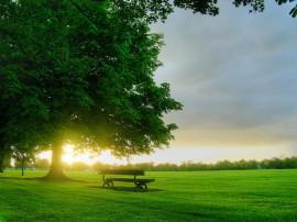 Papel de parede Pôr-Do-Sol Nos Verdes Campos
