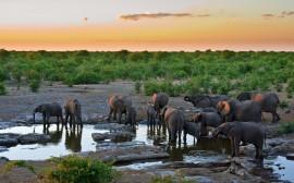 Papel de parede Pôr-Do-Sol com Elefantes