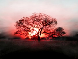 Papel de parede Pôr-Do-Sol Atrás da Árvore