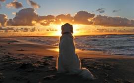 Papel de parede Cachorro Admirando o Pôr-Do-Sol