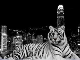 Papel de parede Tigre Na Cidade