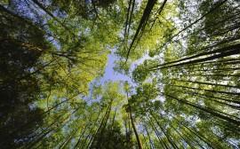 Papel de parede Árvores de Baixo Para Cima