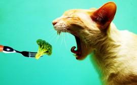 Papel de parede Gato Vegetariano