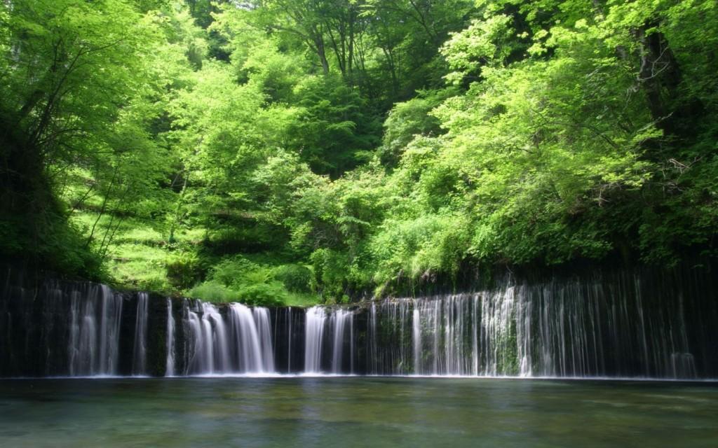 Papel de parede Pequena Cachoeira Na Floresta para download gratuito. Use no computador pc, mac, macbook, celular, smartphone, iPhone, onde quiser!