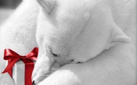 Papel de parede Urso Polar com Presente para download gratuito. Use no computador pc, mac, macbook, celular, smartphone, iPhone, onde quiser!