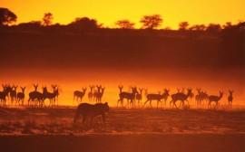 Papel de parede Animais ao Pôr-Do-Sol
