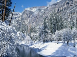 Papel de parede Floresta da Montanha no Inverno