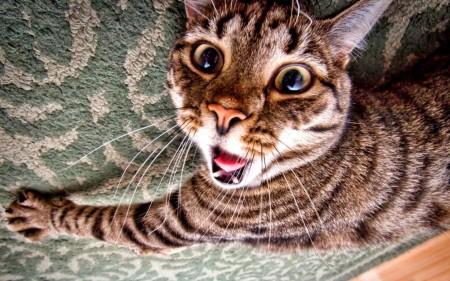 Papel de parede Gato Assustado para download gratuito. Use no computador pc, mac, macbook, celular, smartphone, iPhone, onde quiser!