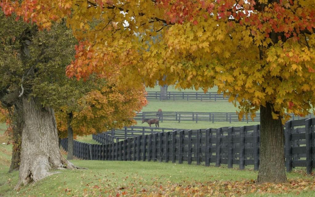 Papel de parede Árvores no Outono para download gratuito. Use no computador pc, mac, macbook, celular, smartphone, iPhone, onde quiser!