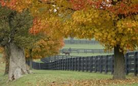 Papel de parede Árvores no Outono