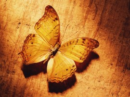 Papel de parede Borboleta Amarela
