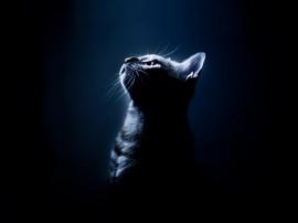 Papel de parede Gato Iluminado