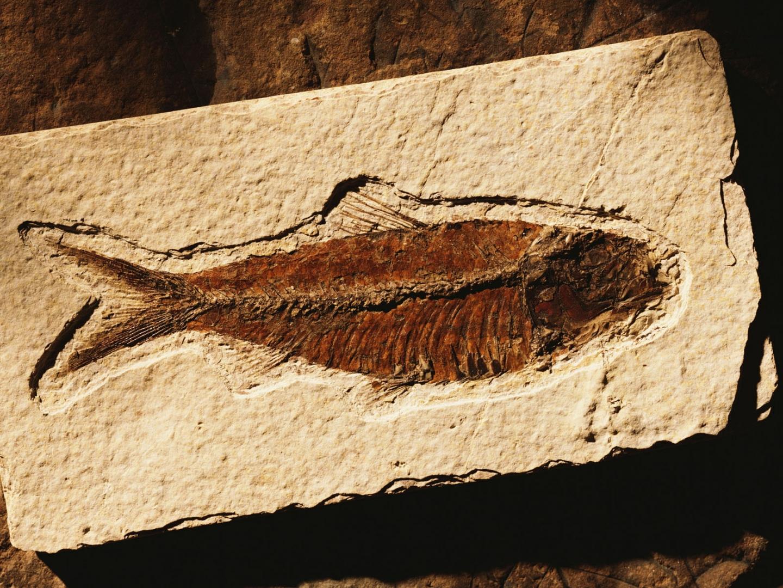 Fóssil de um peixe