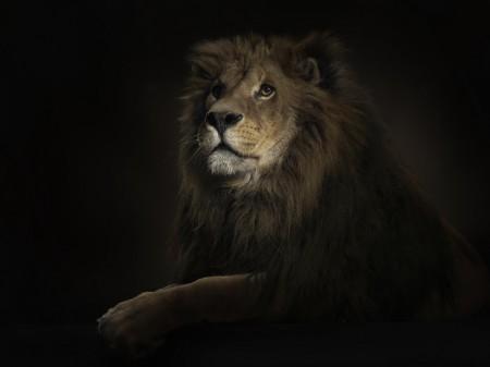Papel de parede Pintura de Leão para download gratuito. Use no computador pc, mac, macbook, celular, smartphone, iPhone, onde quiser!