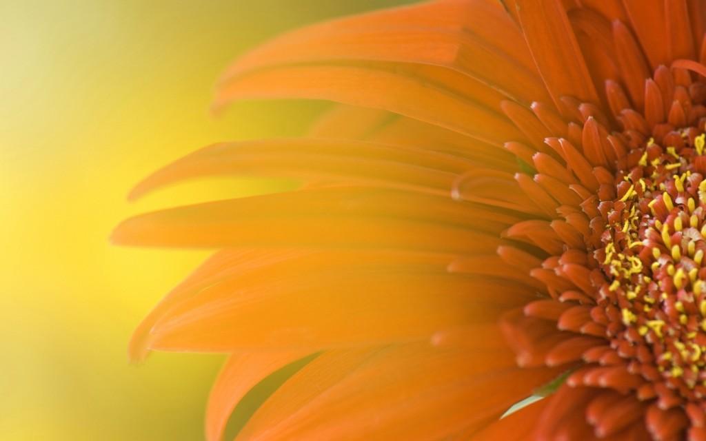 Papel de parede Flor Iluminada Pelo Sol para download gratuito. Use no computador pc, mac, macbook, celular, smartphone, iPhone, onde quiser!