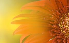 Papel de parede Flor Iluminada Pelo Sol