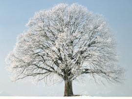 Papel de parede Árvore no Inverno