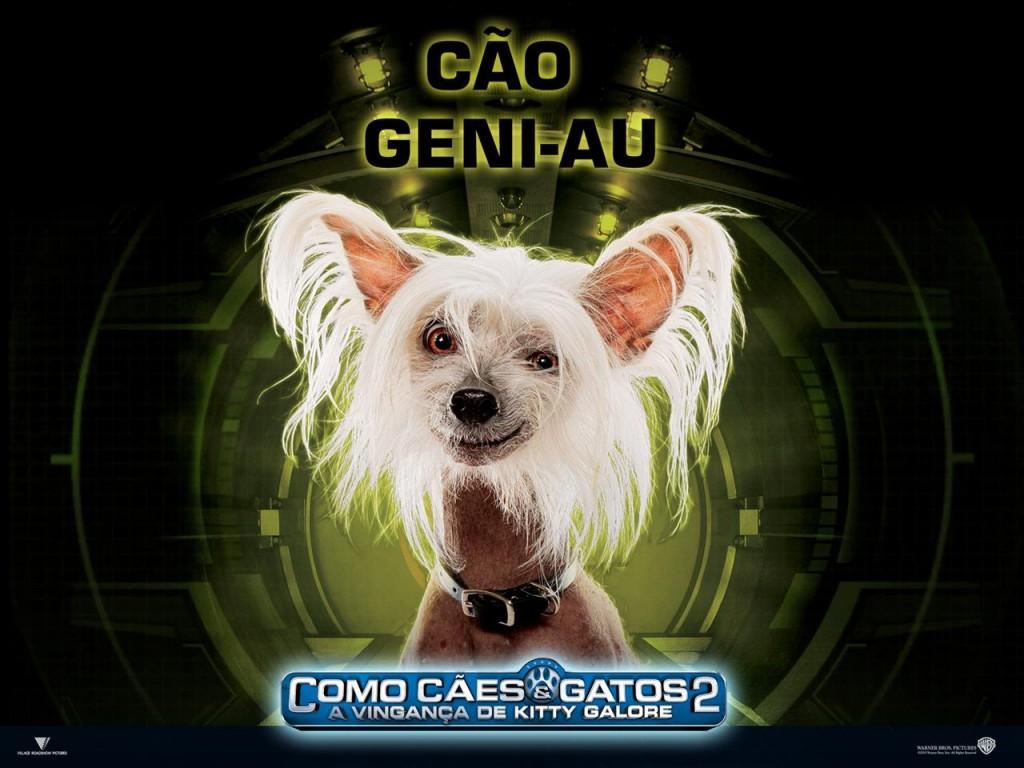 Papel de parede Cão Geni-Au – Como Cães e Gatos para download gratuito. Use no computador pc, mac, macbook, celular, smartphone, iPhone, onde quiser!