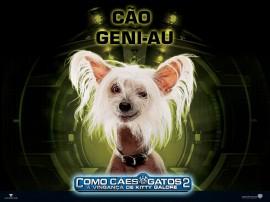 Papel de parede Cão Geni-Au – Como Cães e Gatos