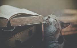 Papel de parede Gato Com Livros